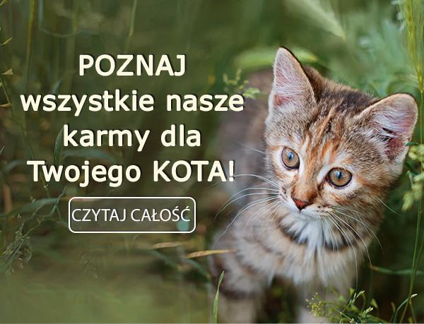 Poznaj wszystkie nasze karmy dla Twojego kota