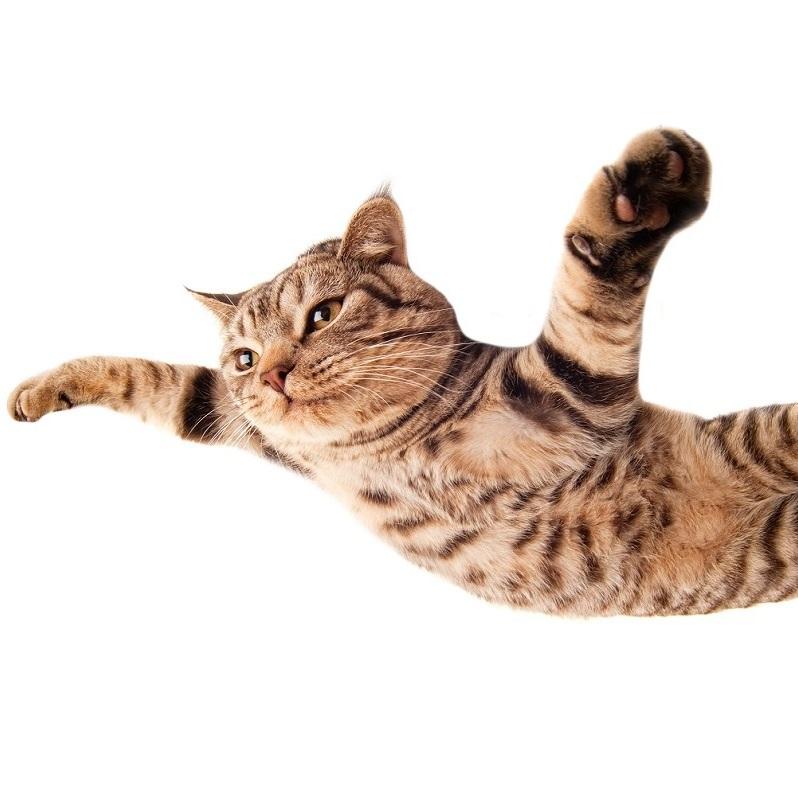 KOCI ZMYSŁ: Latające koty