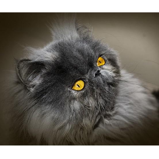Zapalenie spojówek u psów i kotów – przyczyny i leczenie