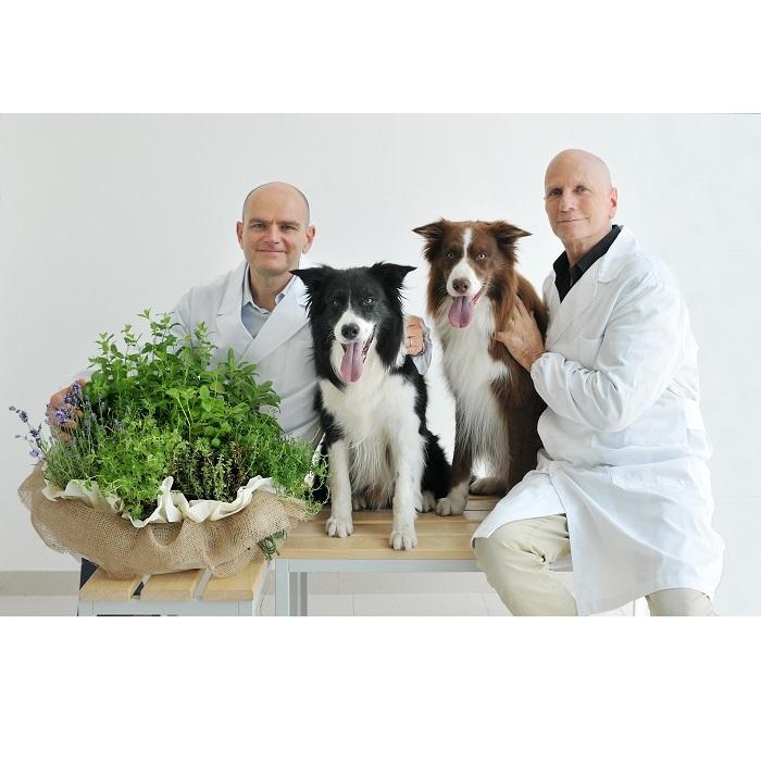 Nietolerancje pokarmowe u psów i kotów: objawy i leczenie