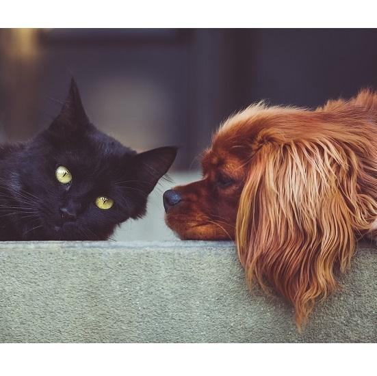 Najczęstsze choroby przewlekłe dotykające psy i koty – Rola zanieczyszczeń