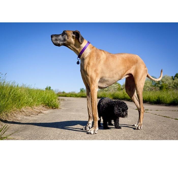 Małe psy: zasady żywienia