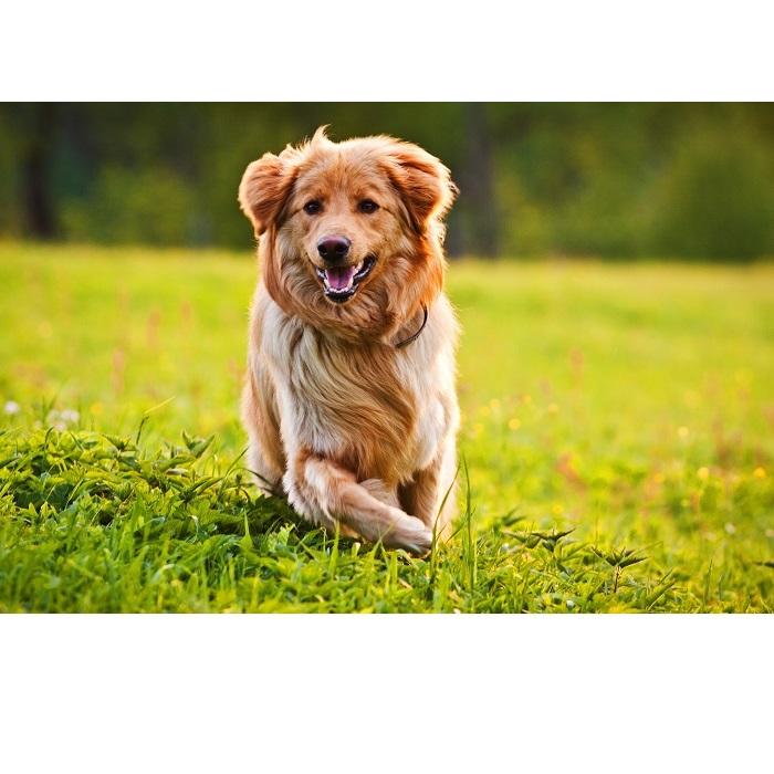 Zapalenie skóry u psów: jak je leczyć?