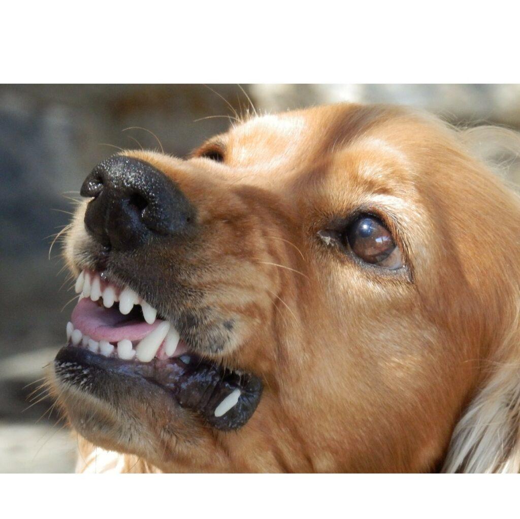Nieprzewidywalność psa - przyczyny i środki zaradcze