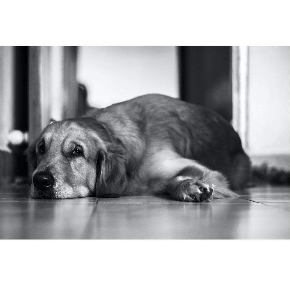 Drżenie u psa – czy trzeba się bać?