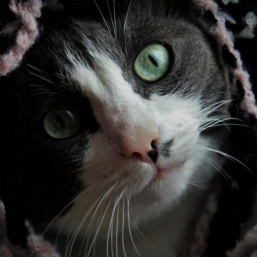 Giardioza u kotów - Poznaj przyczynę, aby ją pokonać